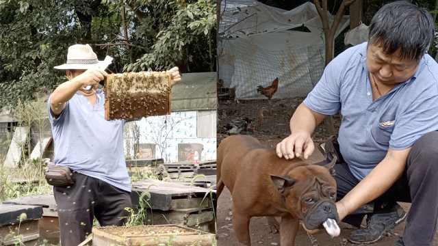 重庆6旬养蜂人与8条狗相伴:每年辗转3000公里,被蜇3000余次