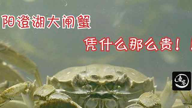 没有能够逃过中秋节的螃蟹,那为何阳澄湖的更贵呢?