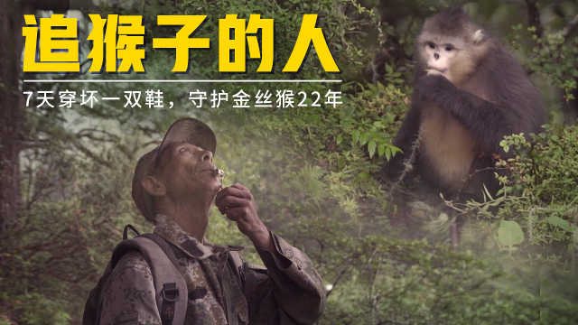 大叔不顾家人反对,守护中国独有金丝猴22年,7天跑烂一双鞋