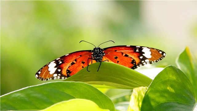 来呀!在这里一年四季看蝴蝶蹁跹