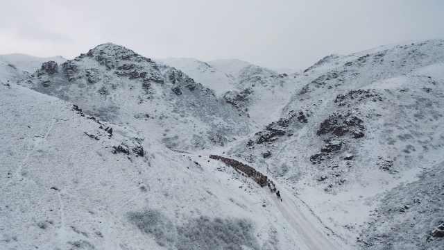 新疆吉木乃17万头牲畜转场迁徙,在雪地绵延数公里成独特风景