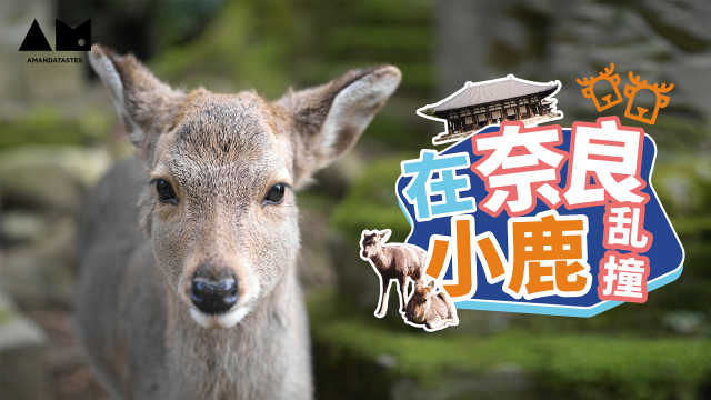 【曼游记】在奈良,我体会到了小鹿乱撞的感觉~
