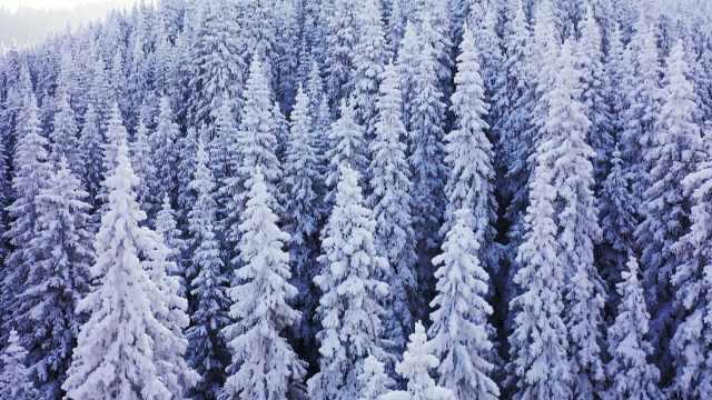 航拍新疆雪淞森林被云海笼罩,游客为旷世雪景驱车百里