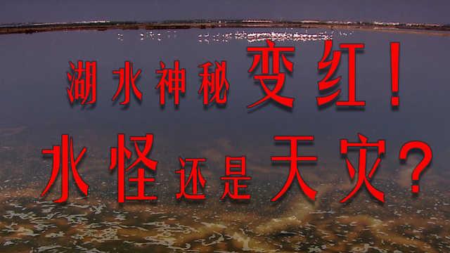 湖水突然变红,是天灾还是人祸?