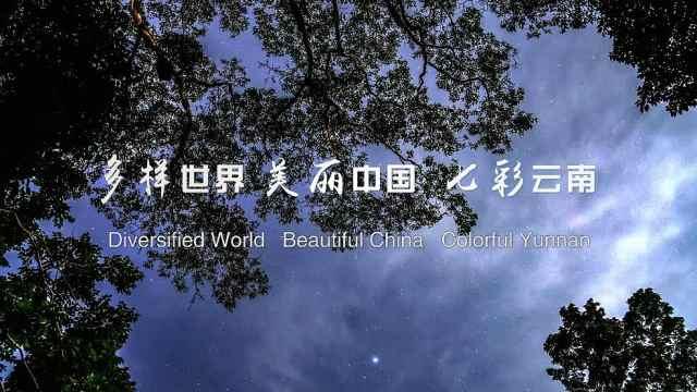 云南生物多样性保护总宣传片《生命之歌》