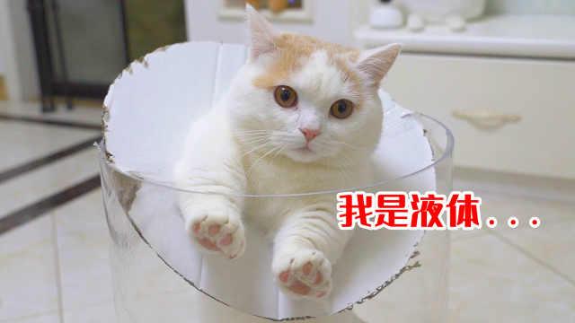 猫咪被360°无死角围观钻洞,结果还卡住了!