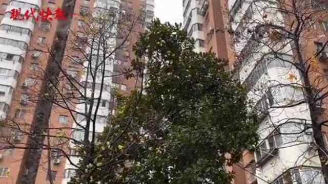 雪到新街口!漫天飞雪的南京久违了