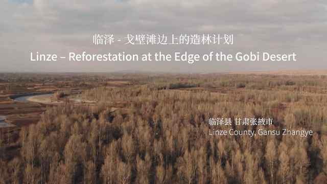 【甘肃临泽县】戈壁滩边上的造林计划  曾经的沙漠变成了绿洲