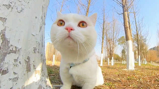 假装把猫咪丢弃在野外,猫会是什么反应?