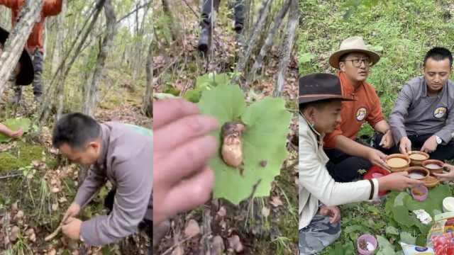 香格里拉藏族3兄弟雨季上山,分享超详细挖松茸教程