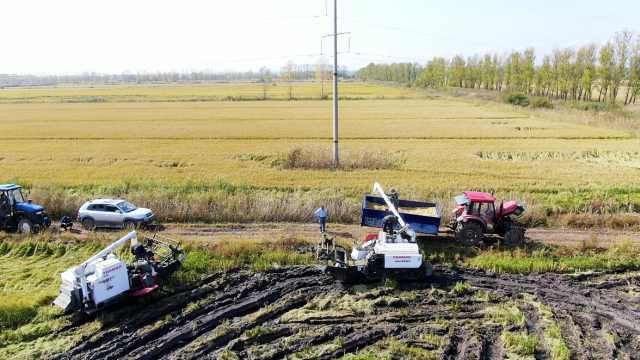 退休水利局长转行当农民,他发誓要种出最好吃大米