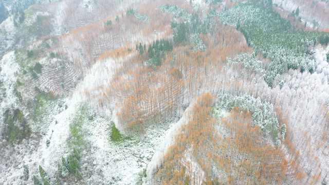 重庆南川山王坪一场皑皑白雪后,万亩林海秒变北国雪原