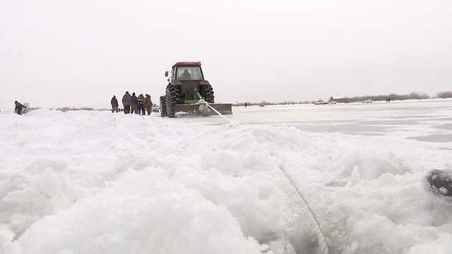 在东北冰面上钻个洞就能捕鱼,鱼多得要靠拖拉机来拉网