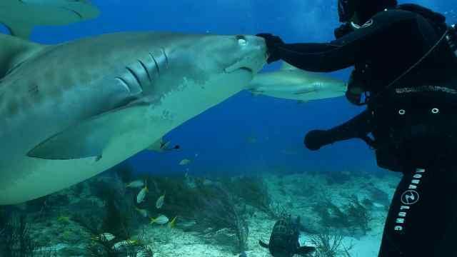 在海底追鲨鱼的女孩