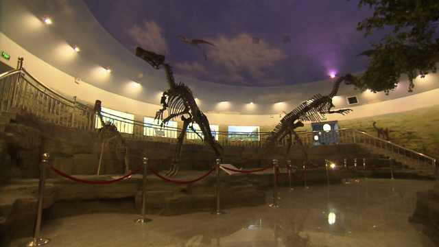 有恐龙化石为证:东北这座小城6500万年前是四季常青的