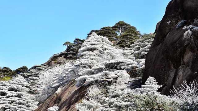 安徽黄山迎首场春雪,雪后云海雾凇壮美如画