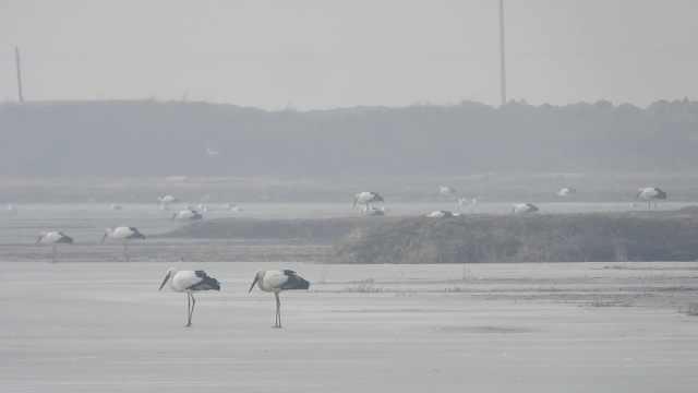 """最佳迁徙""""服务区""""!3000多只东方白鹳在辽宁大凌河湿地停留"""