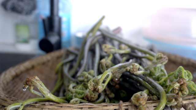 湖北山野里的春天味道!村民上山采蕨菜,焯水后凉拌就能吃