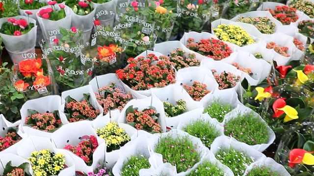 【第一眼】花卉市场销售逐渐升温