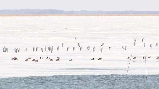 候鸟天堂!这里是候鸟迁徙落脚点,最多日过往量近20万只