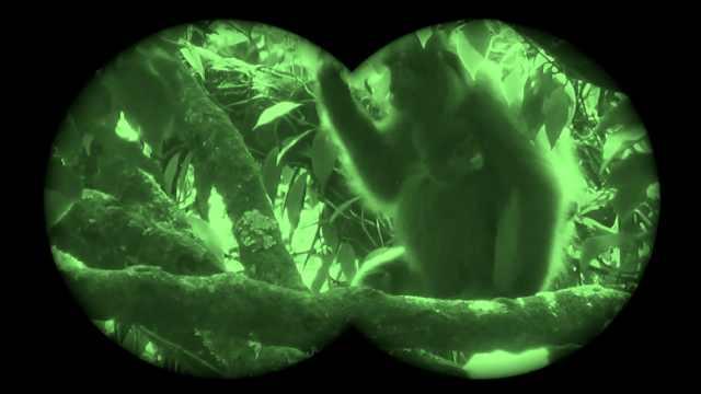 珍贵视频!云南无量山野外近距离拍到灰叶猴母子嬉戏