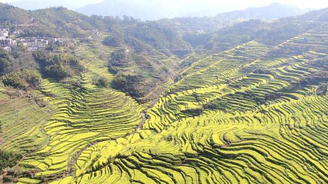 中国最美乡村!航拍江西婺源万亩油菜花梯田