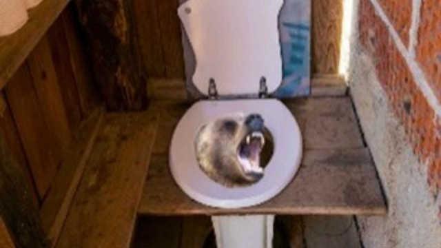 """美国女子野外如厕被马桶""""咬伤""""屁股,一看里面有头熊"""