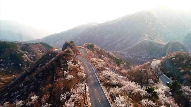 世外桃源!北京京郊最美公路山花怒放,蔓延了60公里