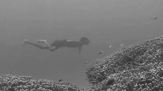 """中国最南边境线上,一群人以海为田,被称为""""深海猎人"""""""