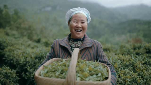 最帅卖茶书记帮全村收入翻十倍,茶农狂喜:天天有钱进