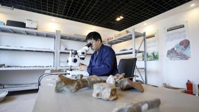 """恐龙爱好者慕了!我在""""中国第一龙乡""""给恐龙化石做保养"""