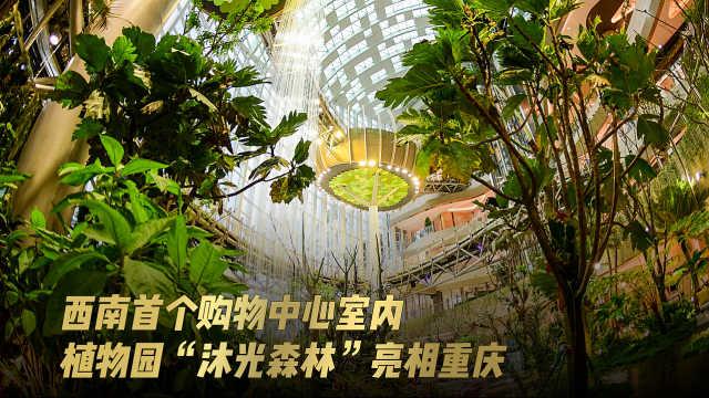 """西南首个购物中心室内植物园""""沐光森林""""亮相重庆"""