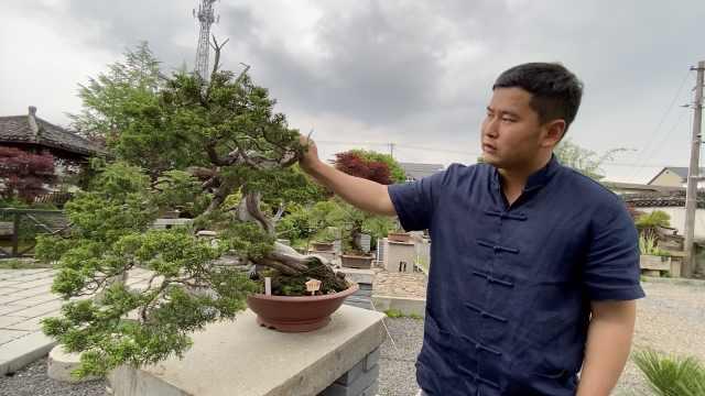 杭州大哥卖掉市区房子,进村租地与盆景为友,妻子相伴入坑