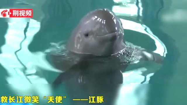 """拯救长江微笑""""天使""""——江豚"""