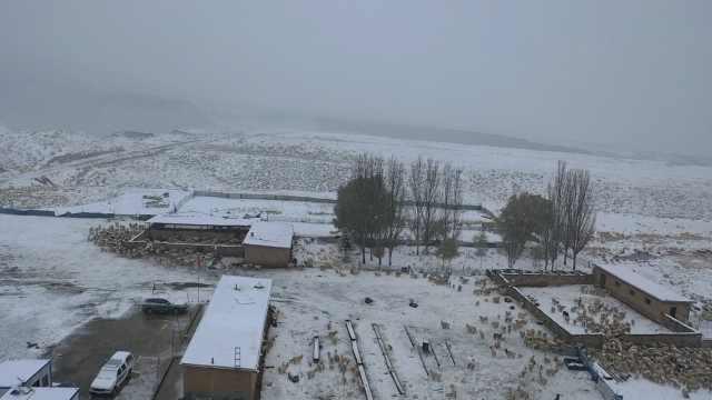 大型寻亲现场!甘肃牧区初夏降雪,百只小羊羔同时岀圈找妈