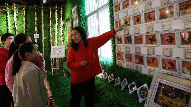 秦岭这个乡村小学仅57名学生,却有一个美丽的蝴蝶标本馆