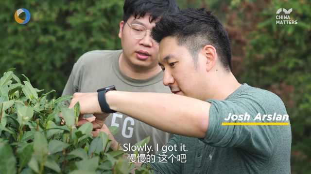 第三只眼看杭州 英国小哥采茶忙
