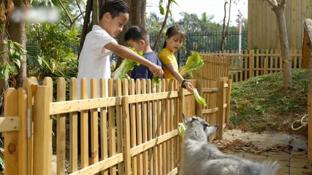 自然森林教育融合国学智慧  助力孩子茁壮成长