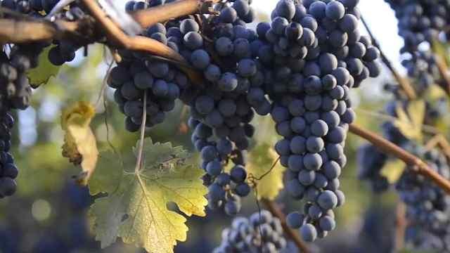 黑山葡萄酒