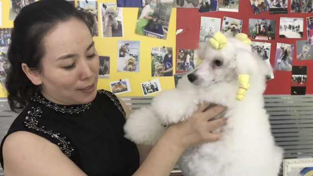 她放弃稳定工作做宠物美容师,家养十几条爱犬