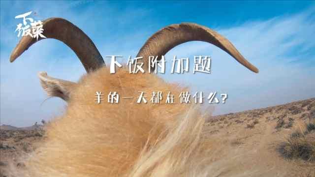 羊的一天都在干什么?你知道不?