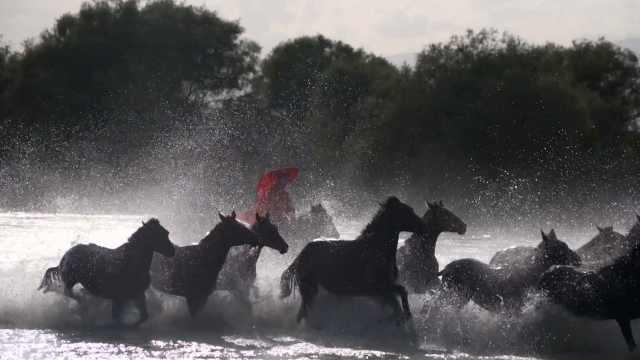 新疆网红副局长贺娇龙策马浴河意外摔河里:为拍好宣传片值得