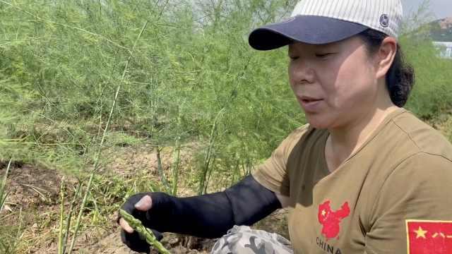 她种的芦笋出口日本1根卖80:可生吃做茶,带动百余农民就业