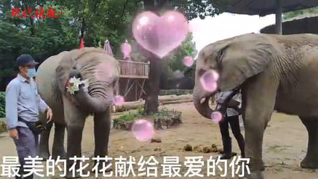 """搞""""对象""""撒狗粮,动物园七夕也浪漫"""