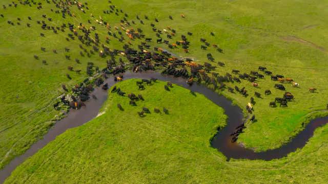 """内蒙古举行草原""""选美""""比赛,来了300多只牛羊马参加"""