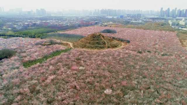 朱元璋子孙68座墓冢散落西安20多村,村民全是守墓人后代