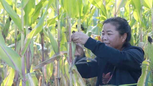 东北农妇3年发表500多篇文学作品,一封家书曾感动哭一家人