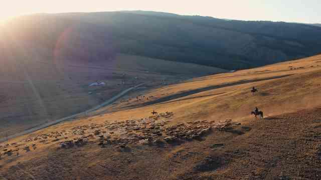 壮观!航拍新疆千年牧道30万头牛羊浩荡大迁徙,绵延数公里