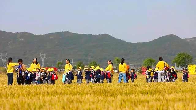 普陀展茅秋色稻米丰收
