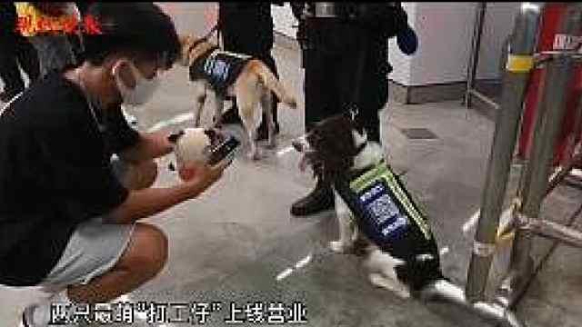 """南京地铁警方带警犬""""摆摊营业"""",国庆假期反诈不停歇"""
